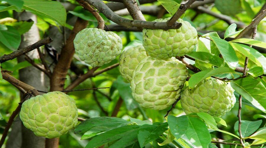 Hậu quả khôn lường khi ăn 9 loại trái cây này vào buổi tối 7