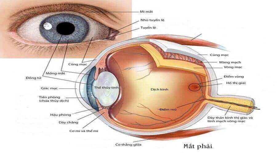 Mất thị giác, bệnh võng mạc do tiểu đường 2