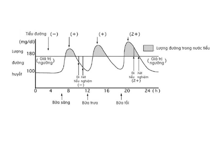 Tìm hiểu về lượng đường trong máu, lượng đường trong nước tiểu, HbA1c 2