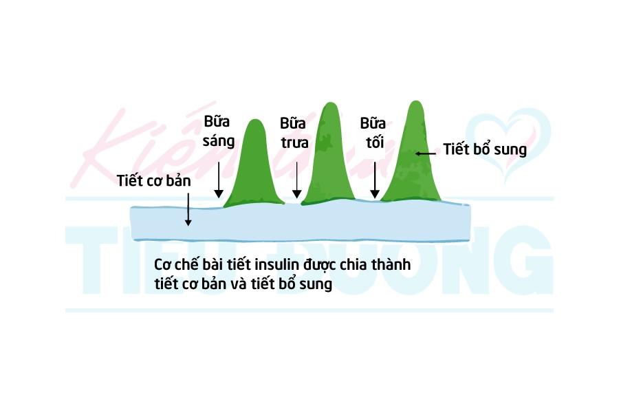 Điều trị bằng liệu pháp insulin ở bệnh nhân tiểu đường tuýp 2 - 1