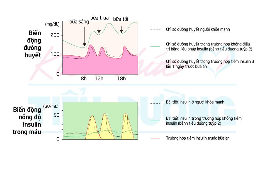 Điều trị bằng liệu pháp insulin ở bệnh nhân tiểu đường tuýp 2 - 2