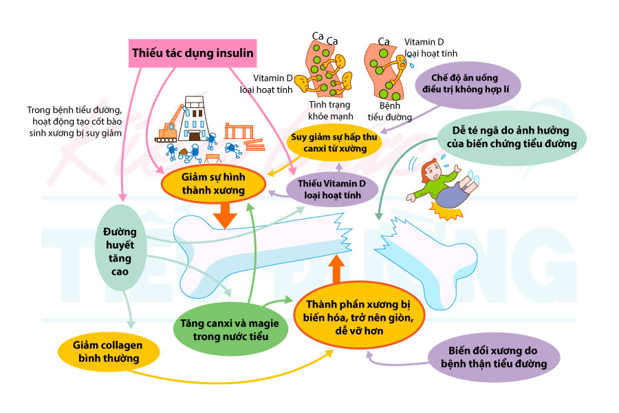 Mối quan hệ bệnh tiểu đường và suy giảm khối lượng xương 3